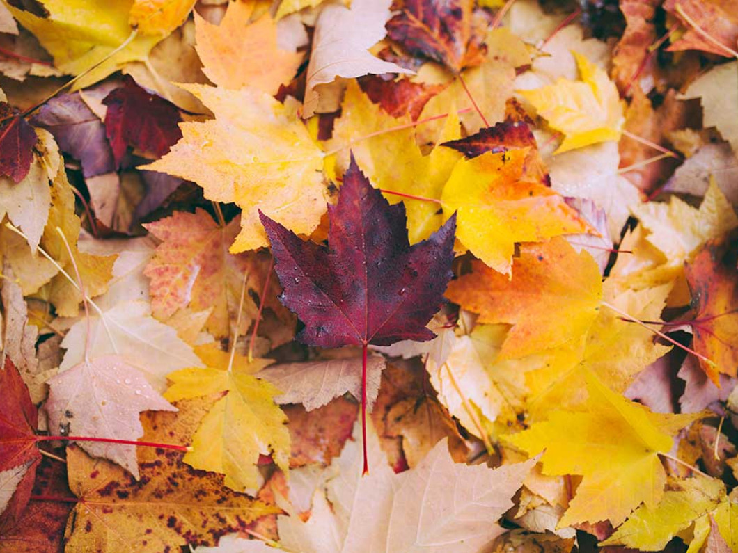 Stop Scraping Leaves Out of Your Clogged Gutters